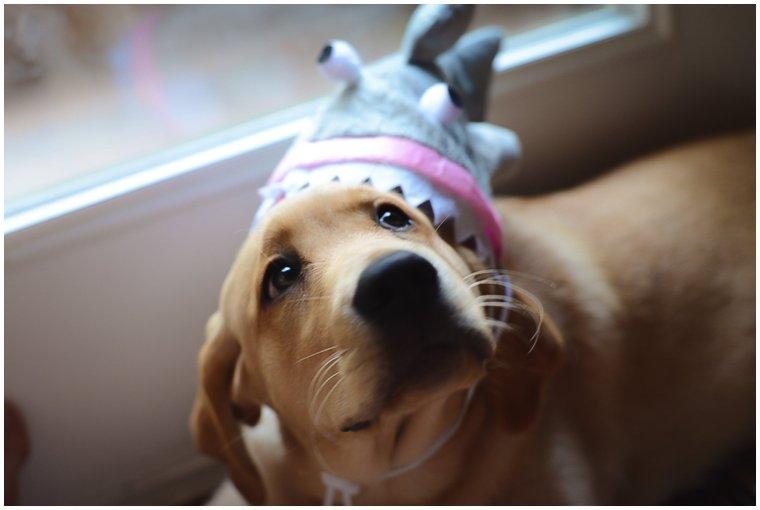 Stephanie Kopf Photography Luna Yellow Labrador Retriever Occooquan Virginia